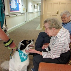 Coventry Dog Therapy