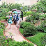 Garden_Party_1