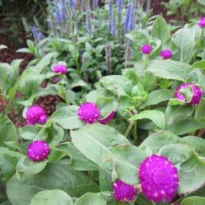 York Garden